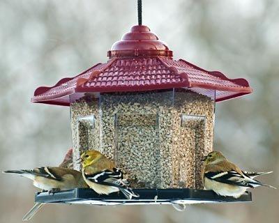 Audubon Gazebo Bird Feeder