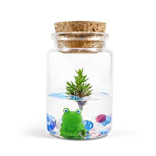 Bonsai Terrarium Dwarf Japanese Garden Juniper x Frog 3 Jar Real Live Plant Maintenance Free