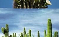 10-PC-Saguaro-Cactus-Seeds-Giant-Desert-Plant-M-39.jpg