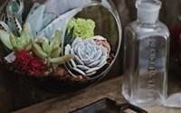 Hanging-Globe-Glass-Terrarium-Indoor-Succulent-Garden-plants-Included-19.jpg