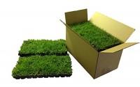 Bermuda-419-Grass-Plugs-72-per-Box-13.jpg