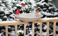 Ez-Tilt-to-clean-Heated-Bird-Bath-Deck-mounted3.jpg