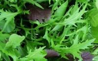 1000-Mizuna-Seeds-Japanese-Salad-Greens-Exotic-Garden-Vegetable-Annual-16.jpg