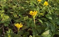 Home-Comforts-Yellow-Daisy-Dasie-Flower-Flowering-Grass-Yellow-Vivid-Imagery-Laminated-Poster-Print-24-x-36-61.jpg