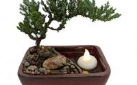 Reflections-Japanese-Juniper-Bonsai-Tree-Pot-Saucer-LED-Floating-Candle-6x4x2-9.jpg